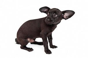 gestresster Hund und ängstlich